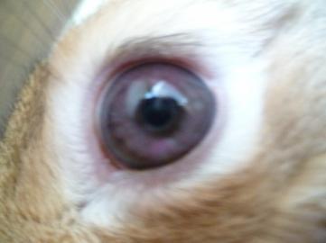 Oeil bizarre