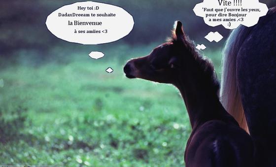 """"""" Pour connaître un cheval, il faut apprendre à le comprendre. """""""