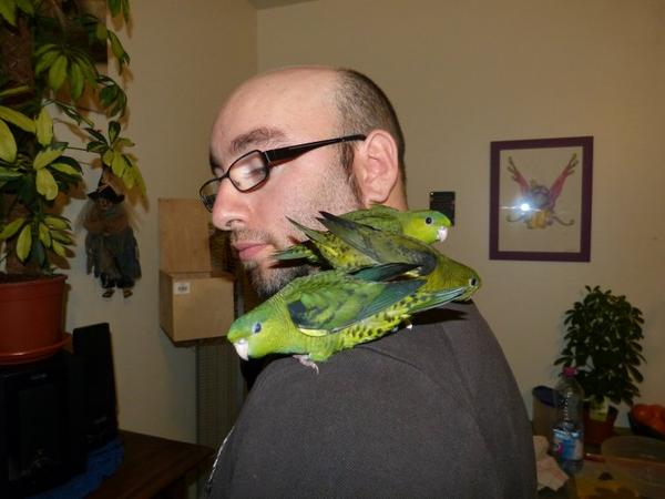 mes 2 couples de perruches catherines avec quelques une des bébés