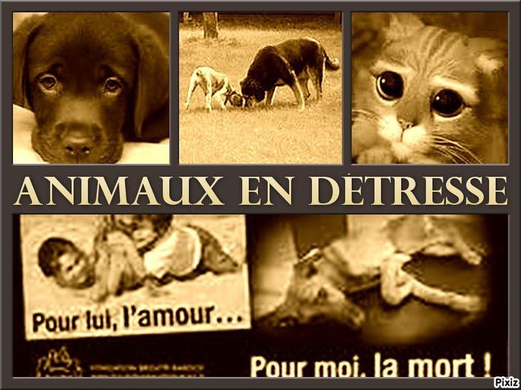 Si tu es pour la protection des animaux, REMIXE !!!!