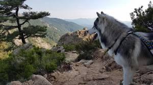 Cani rando aux Aiguilles de Bavella