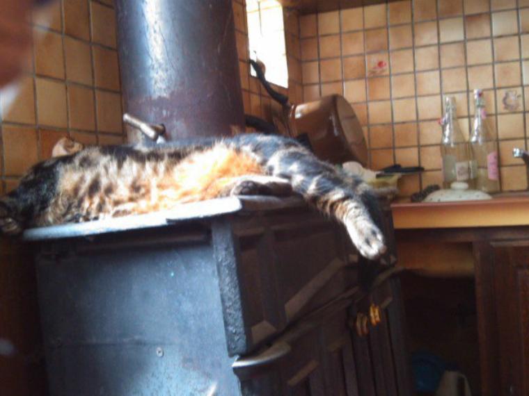 un peu froid ma pépette? lol dors sur le poêle à bois!