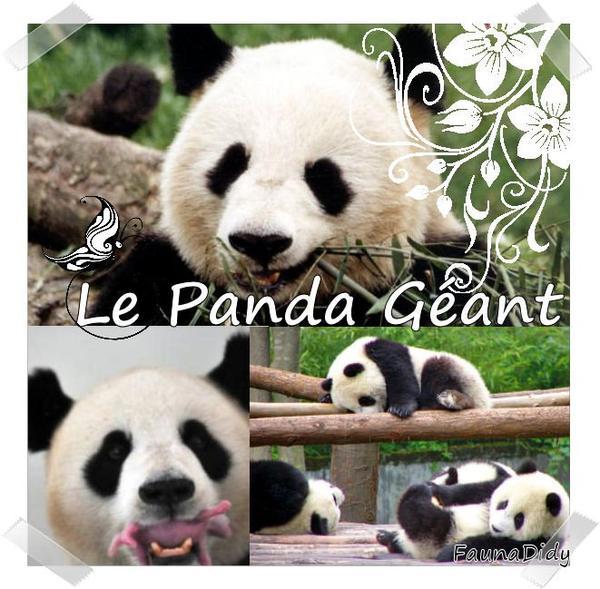 FICHE N° : Le Panda Géant