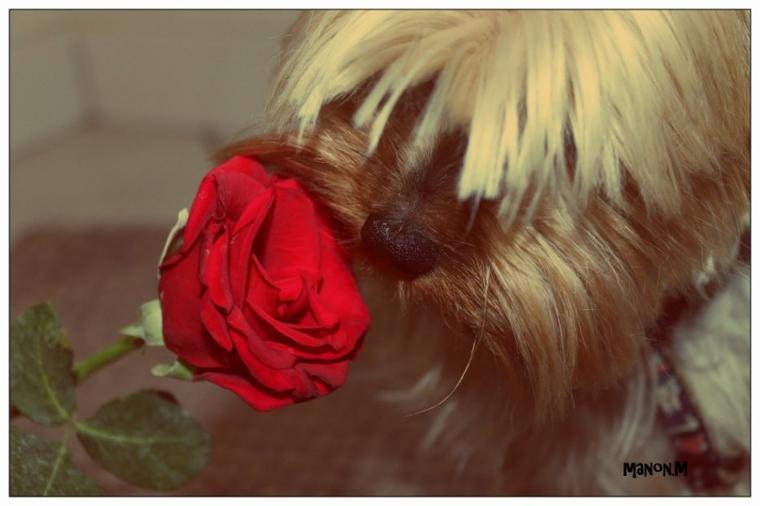 Mon amour .. ♥