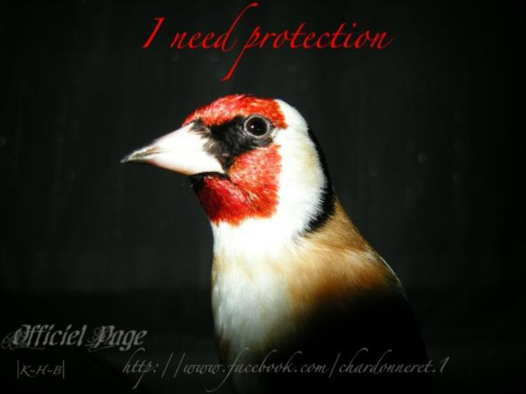 I need protection