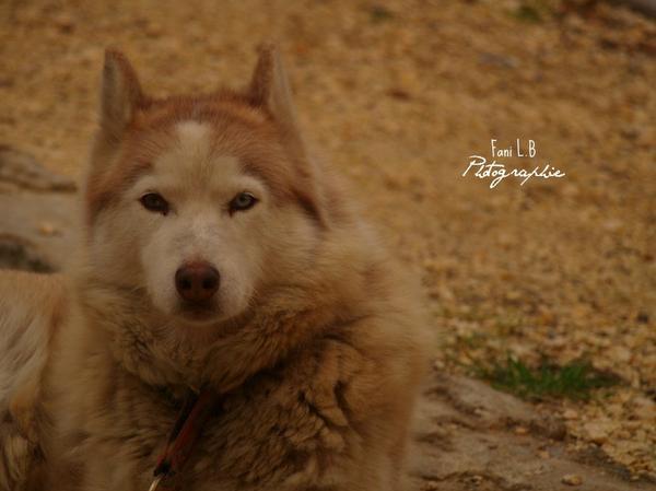 Ruskine,une beauté sur patte.