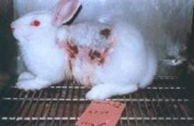 images sur l'expérimentation animale