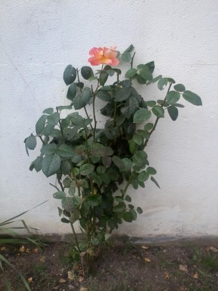 Toi, ma belle fleur