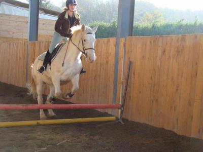 L'équitation bien plus qu'une passion ! ♥