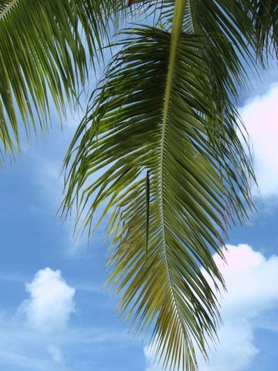 2 & 3 ème voyage Aruba : photo par moi