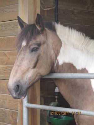 L'amour c'est toujours emporter quelqu'un sur un cheval