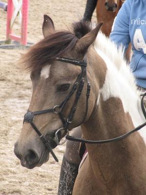 Le paradis de la terre se trouve sur le dos d'un cheval