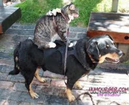 monture a ma taille pour mon cour d'équitation!!!!