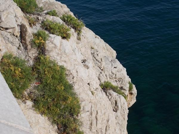 article sur la nature que j'aime beaucoup(2)