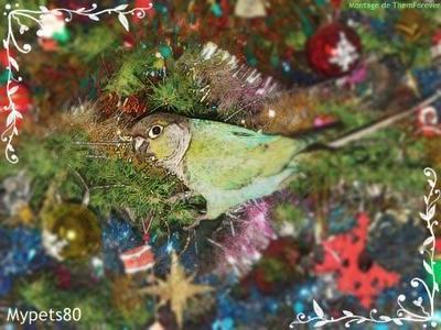 Joyeux noël & bonne et heureuse année 2012