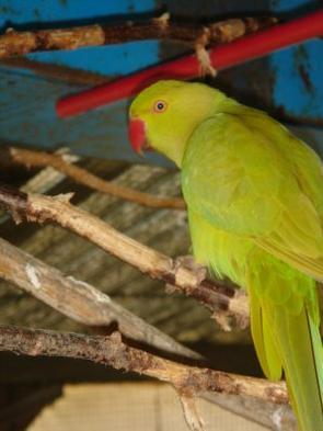 Voici quelques photos des oiseaux pris cette après midi