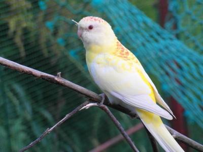 """Quelques photos des """"nouveaux"""" oiseaux"""