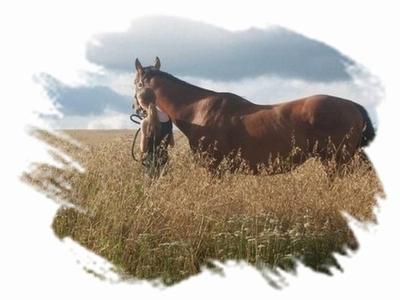 Article 9 :Du Vingt-Quatre Avril Deux Mille Onze au Vingt-Quatre Avril Deux Mille Douze, Une année qui s'achève ... Un an poney ♥
