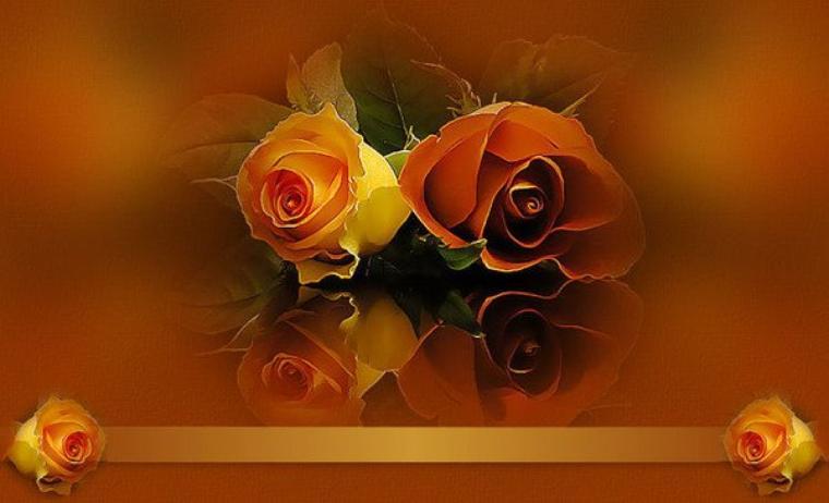 """""""les roses d"""" George Eliot"""