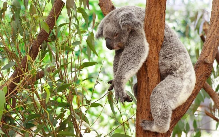 le sommeil des mammifères
