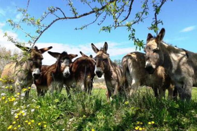 les premiers ânes :conte pour enfant sage   de Jacques Prévert