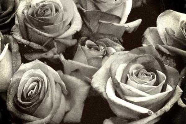 Nous voila dans la photographie maintenant ....Les roses ...