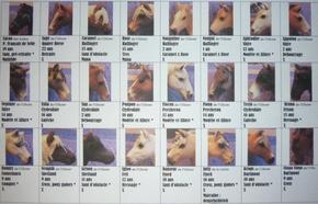 Photomaton de mes chevaux