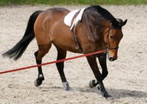 longer un cheval (part 1)