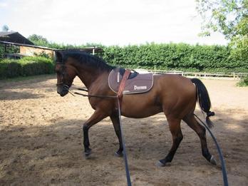 longer un cheval (part 2)