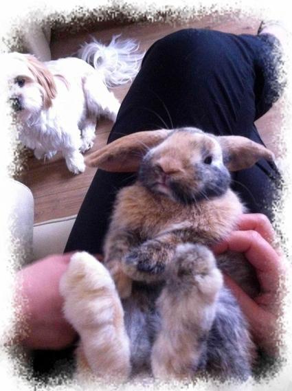 petit lapin...