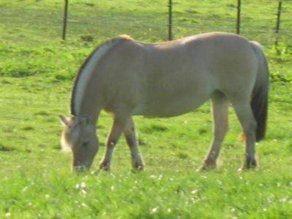Un poney ça nous donne tout, nous ? on doit juste le rendre tout l'amour indescriptible qu'il nous donne ! E. K. ♥