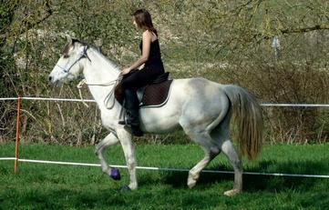 """""""Le cheval est pour l'homme ce que sont les ailes pour l'oiseau."""""""