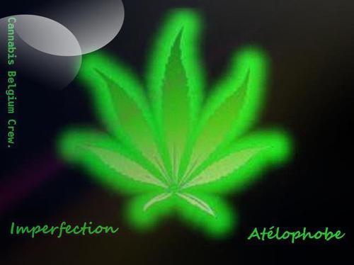 Cannabis Belgium Crew ~