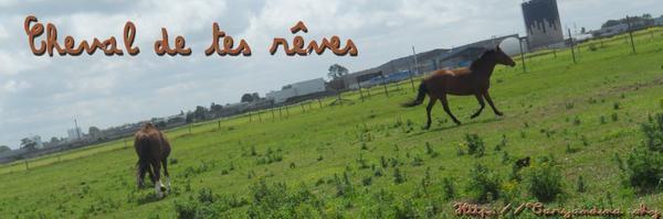 cheval de tes reve