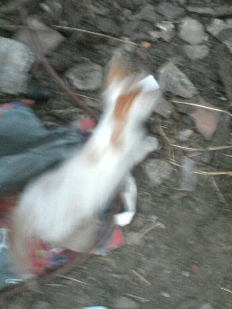 Voici des photo de mes ptit chaton
