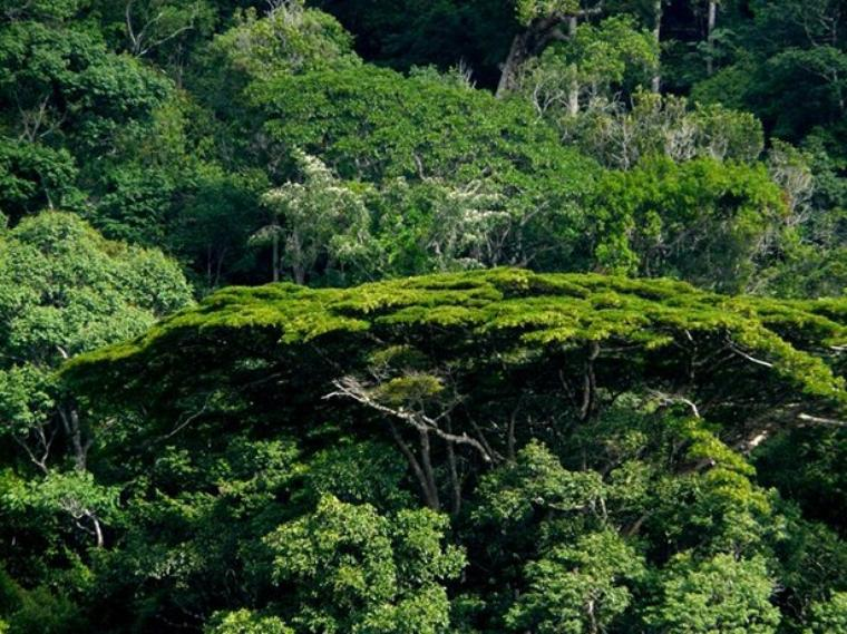 PARC NATIONAL DE GUYANE