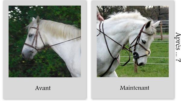 ♥ Le travail sur le mental et l'emotionel du cheval est sans fin ! ♥