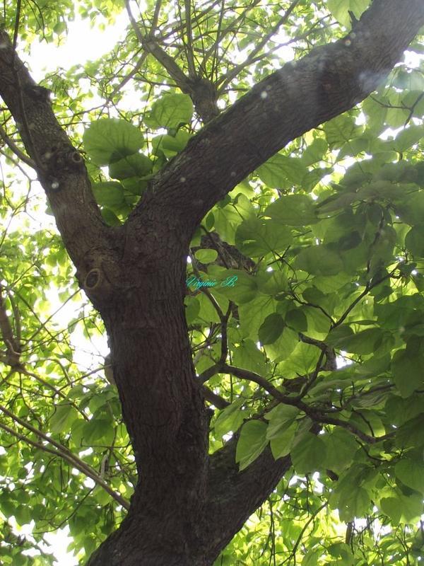 Arbre avec feuilles
