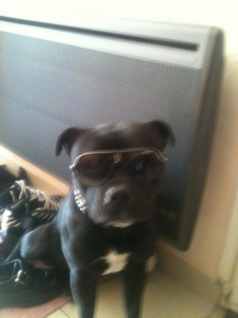 Hahhah.  En mode goss bo.!!  Il a mange c es lunette