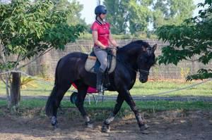 Conguito devient un vrai cheval !