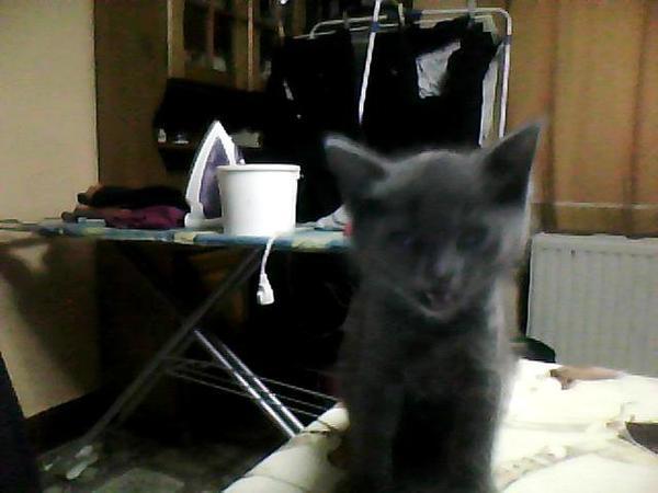 les présentation des chats de la maison ^^