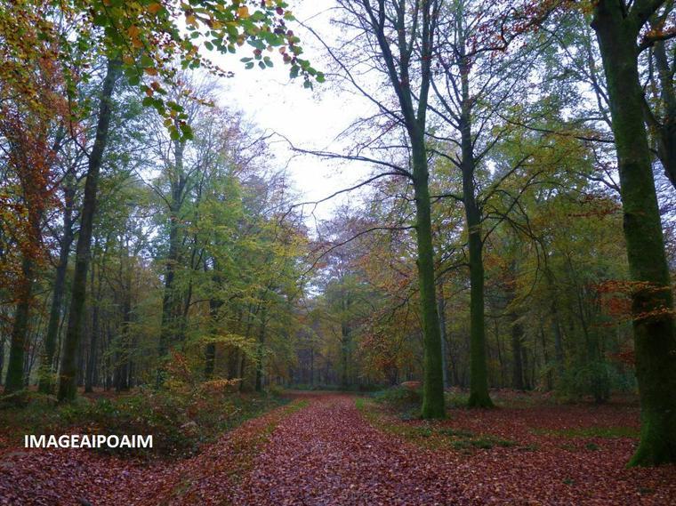 """Forêt d'automne : """"Crécy-en-Ponthieu"""" ..."""