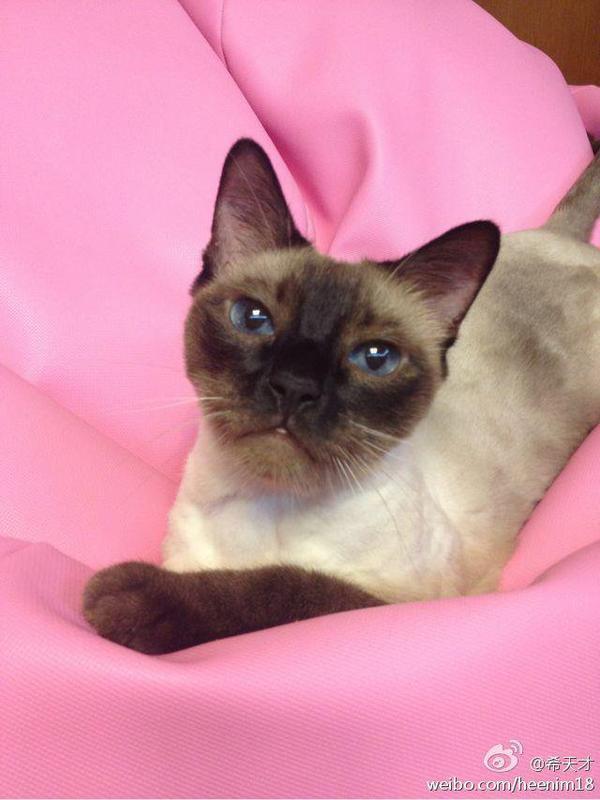 Le chat des Suju III & IV