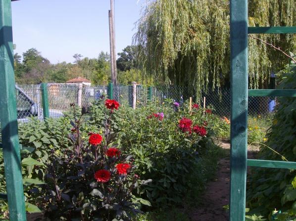 les fleurs dans le jardin pour les insectes et les bouquets de fleurs..
