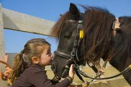 """""""Monter un cheval vous donne un goût de liberté.""""     Helen Thomson."""