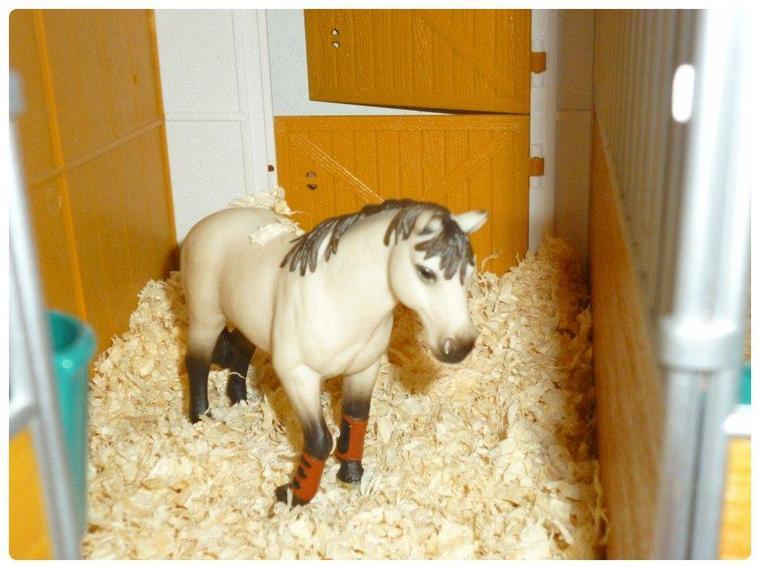 ♥Le nouveau cheval ♥