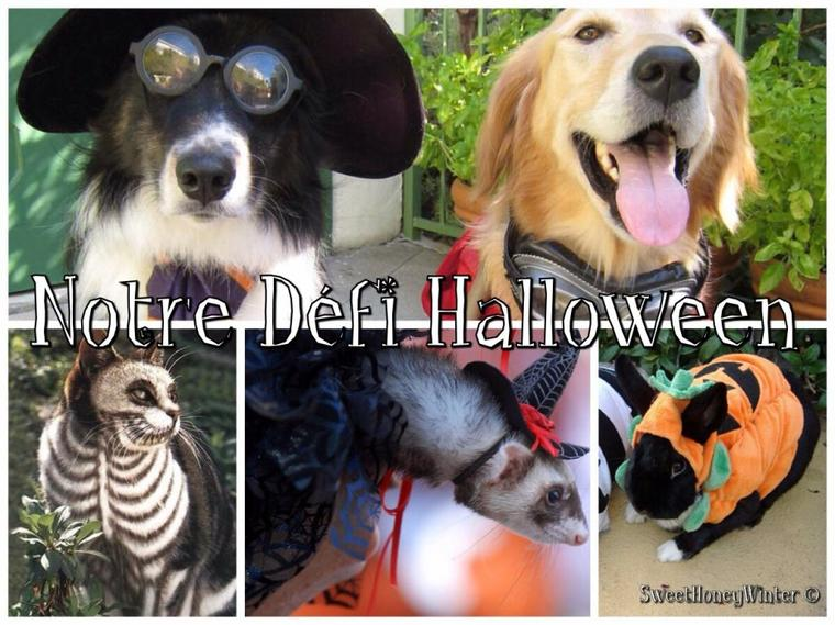 ~ Notre Grand Défi Halloween ~