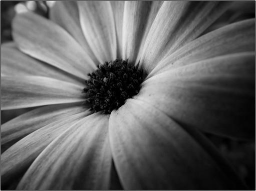 Cette fleur qui n'apporte rien, sauf l'essentiel dont vit chaque être : l'amour.