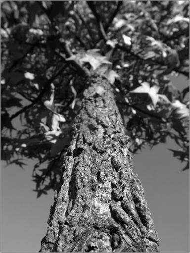 L'arbre du silence porte les fruits de la paix.