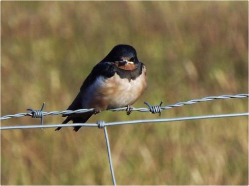 Dieu aima les oiseaux et inventa les arbres. L'homme aima les oiseaux et inventa les cages.